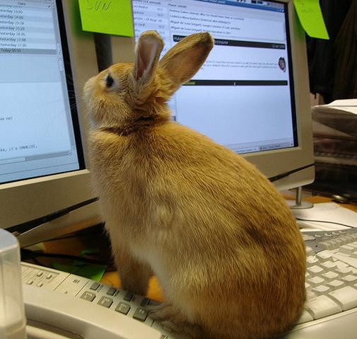[Bunny at the keyboard]